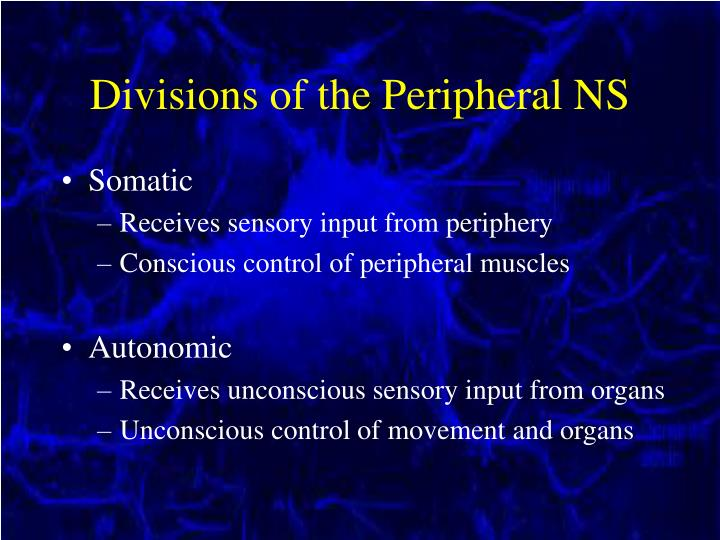 Divisions of the Peripheral NS