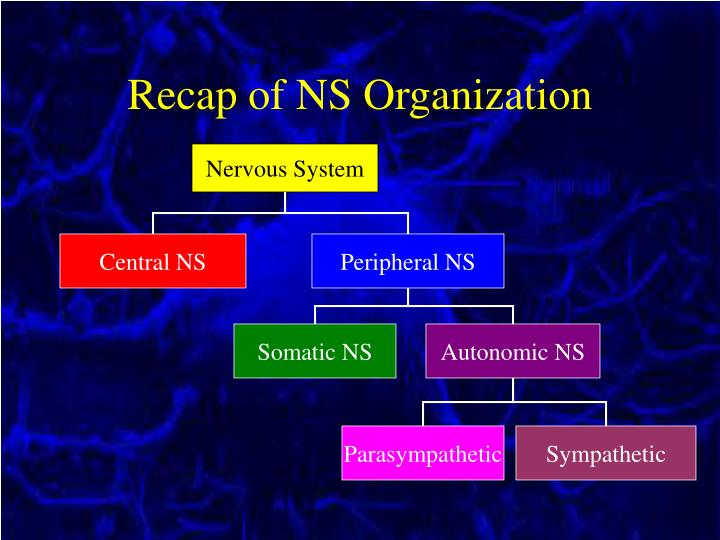 Recap of NS Organization