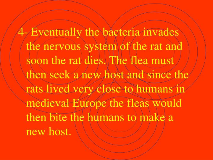 4- Eventually the bacteria invades the nervous system of the rat and soon the rat dies. The flea must then seek a new host and since the rats lived very close to humans in medieval Europe the fleas would then bite the humans to make a new host.