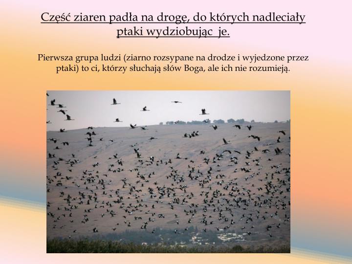 Część ziaren padła na drogę, do których nadleciały ptaki wydziobując  je.