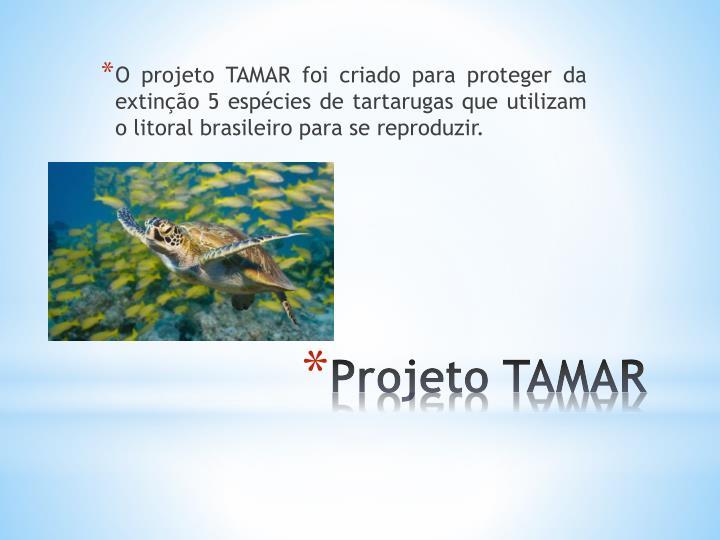 O projeto TAMAR foi criado para proteger da extinção 5 espécies de