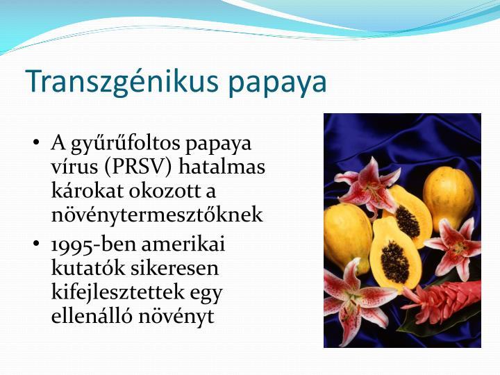 Transzgénikus papaya