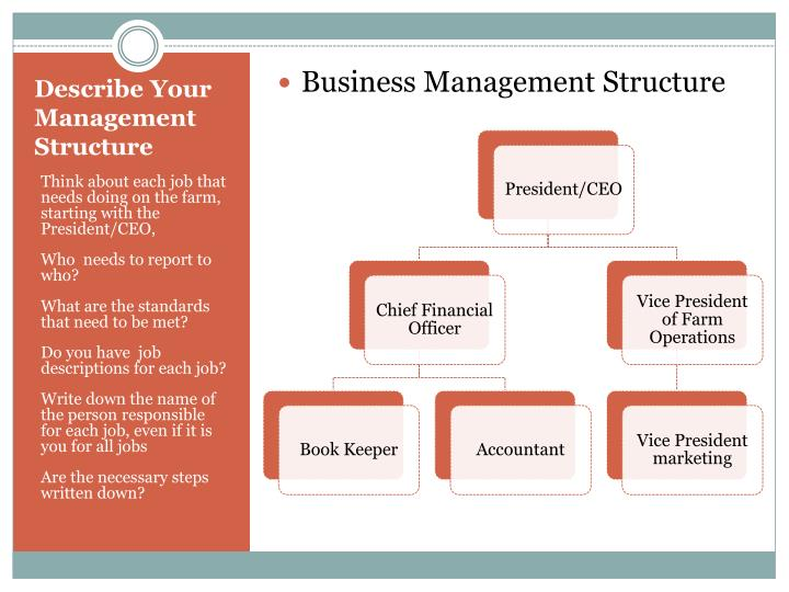Business Management Structure