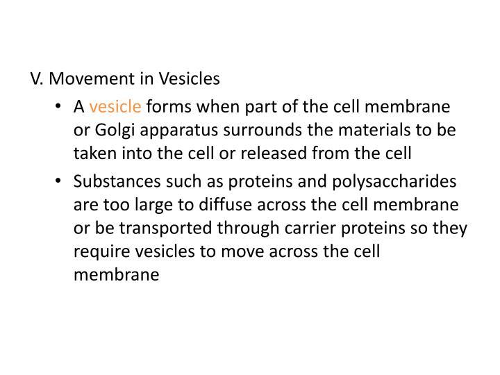 V. Movement in Vesicles