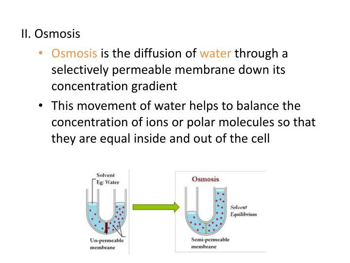 II. Osmosis