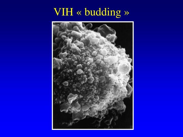 VIH budding