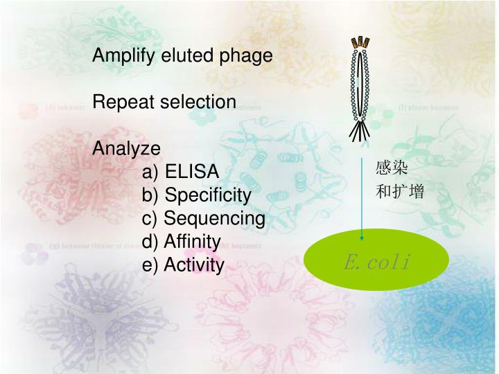 Amplify eluted phage