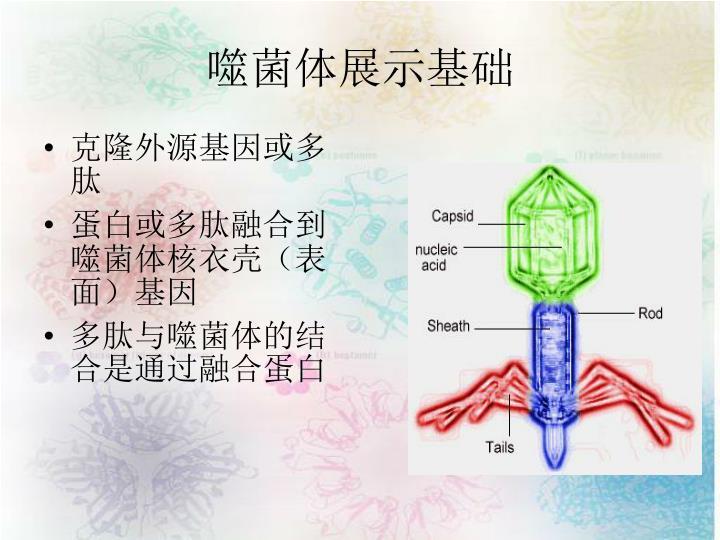 克隆外源基因或多肽