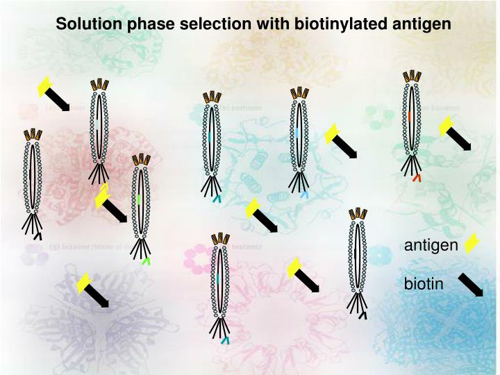 Solution phase selection with biotinylated antigen