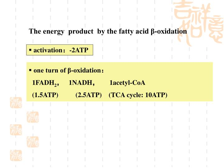 The energy  product  by the fatty acid β-oxidation