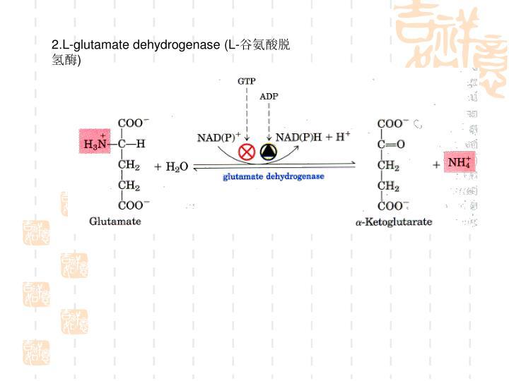 2.L-glutamate dehydrogenase (L-