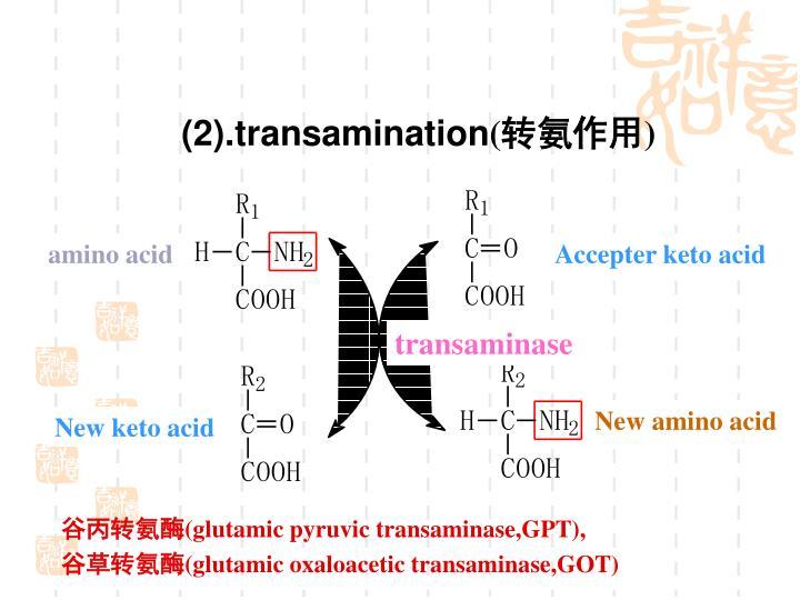 (2).transamination