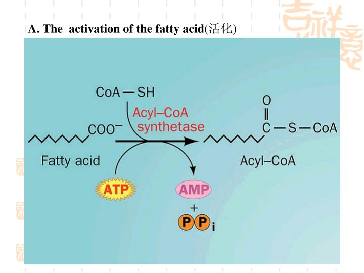 A. The  activation of the fatty acid