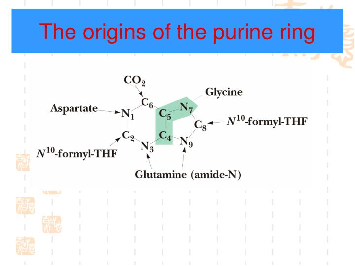 The origins of the purine ring