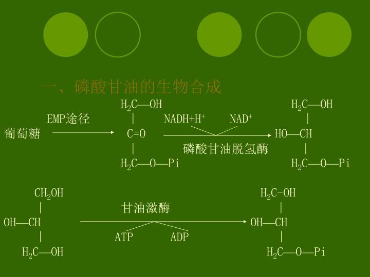 一、磷酸甘油的生物合成