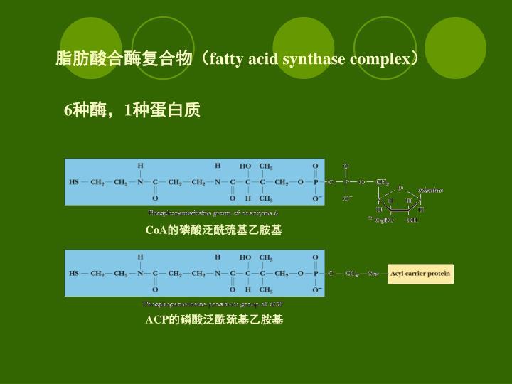 脂肪酸合酶复合物(