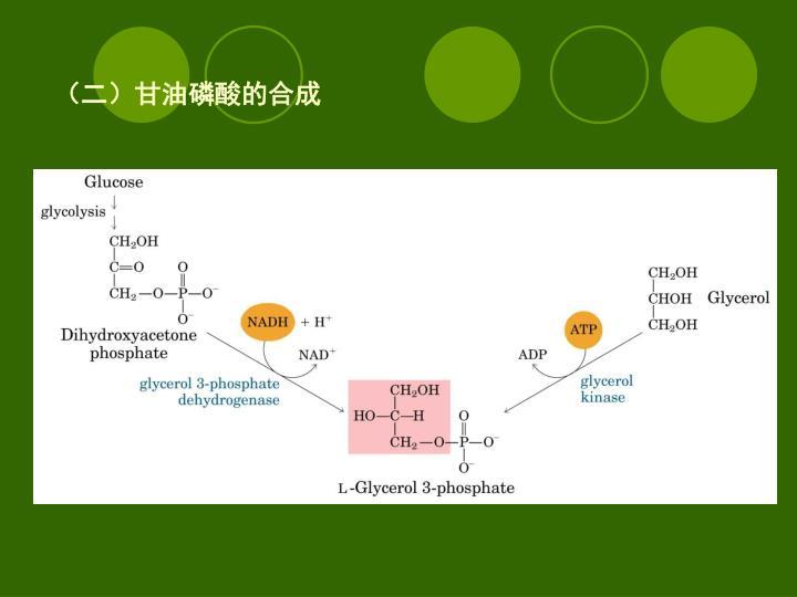 (二)甘油磷酸的合成
