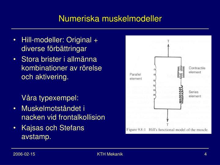 Numeriska muskelmodeller