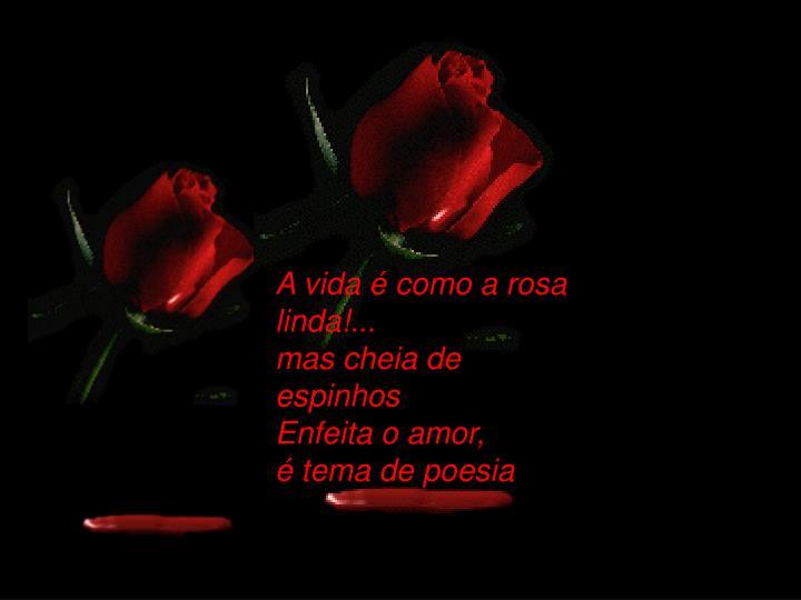 A vida é como a rosa