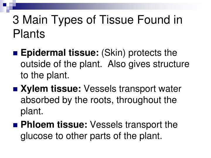 3 Main Types of Tissue Found in Plants