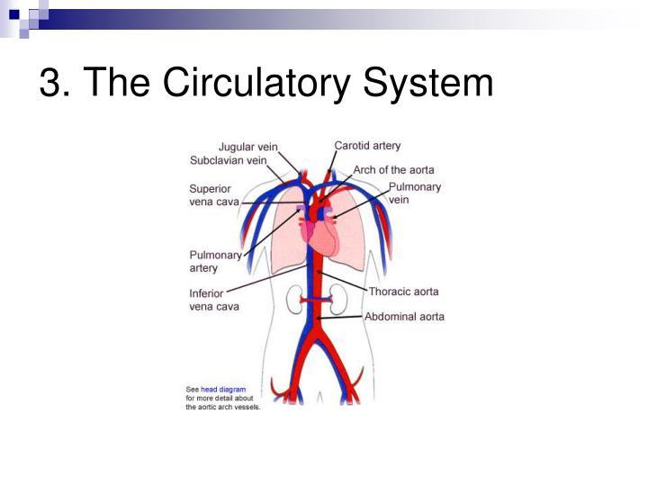3. The Circulatory System
