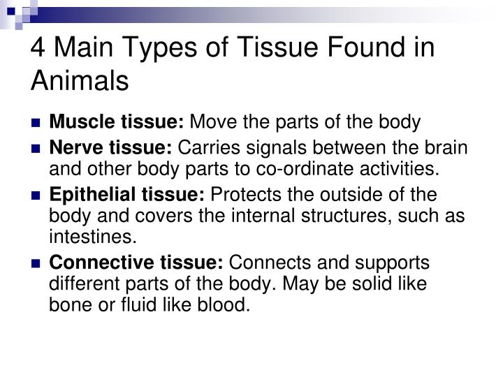 4 Main Types of Tissue Found in Animals