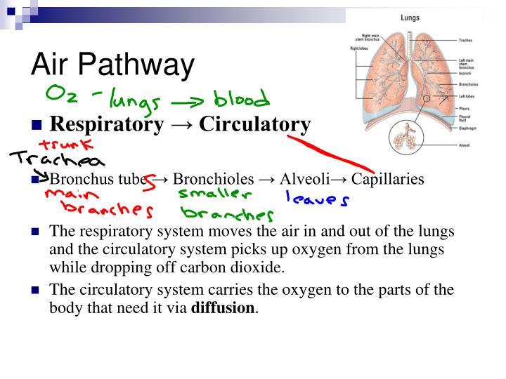 Air Pathway