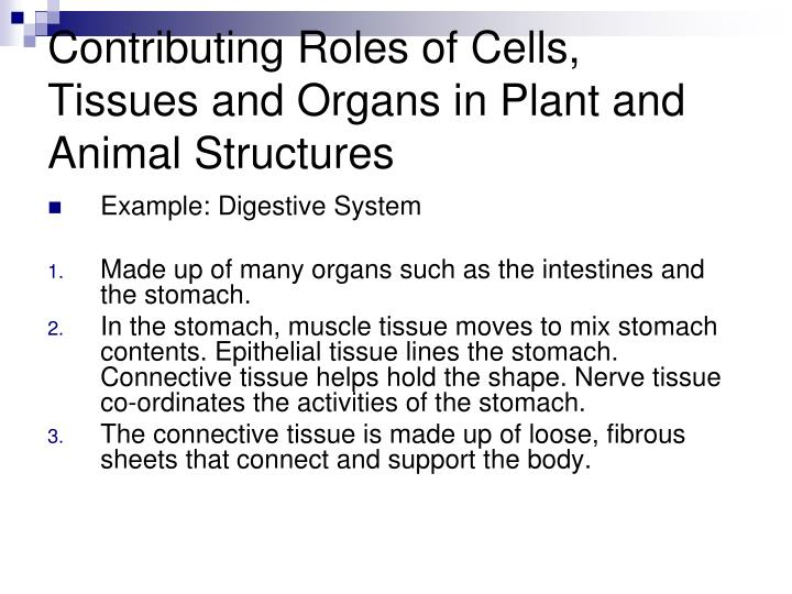Contributing Roles of Cells, Tissues and Organs in Plant and Animal Structures