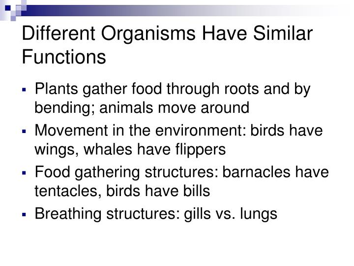 Different Organisms Have Similar Functions