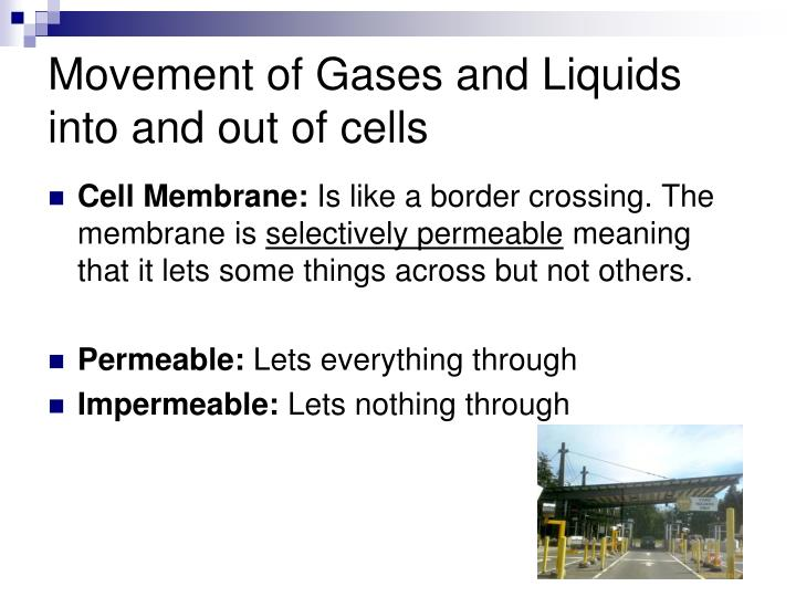 Movement of Gases and Liquids into and out of cells