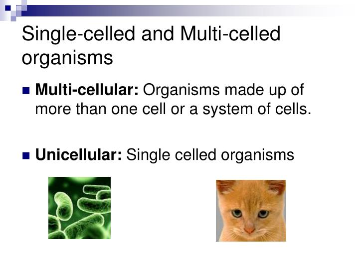 Single-celled and Multi-celled organisms