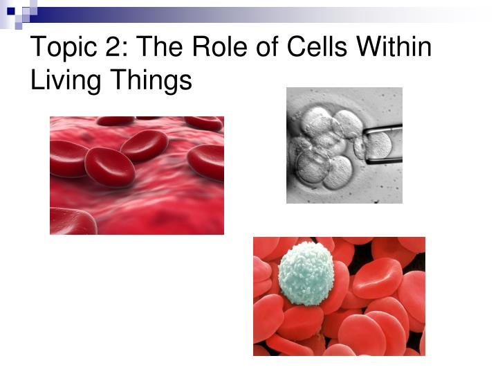 Topic 2: The Role of Cells Within Living Things
