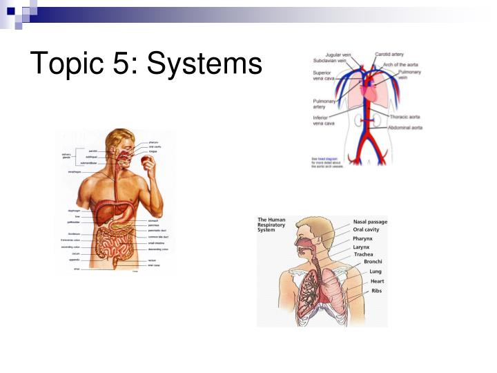Topic 5: Systems