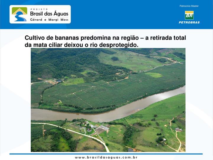 Cultivo de bananas predomina na região – a retirada total da mata ciliar deixou o rio desprotegido.