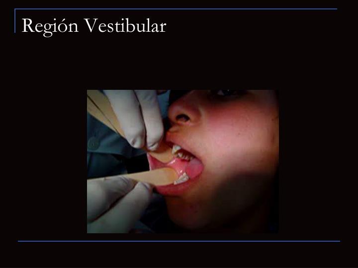 Región Vestibular
