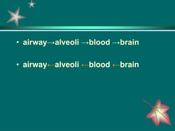 airway→alveoli →blood →brain