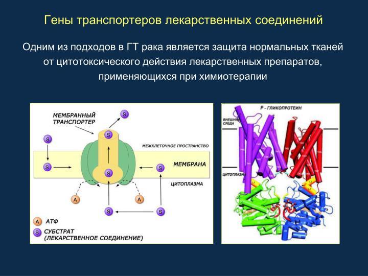 Гены транспортеров лекарственных соединений