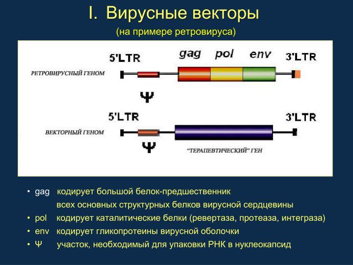 Вирусные векторы