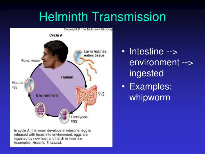 Helminth Transmission