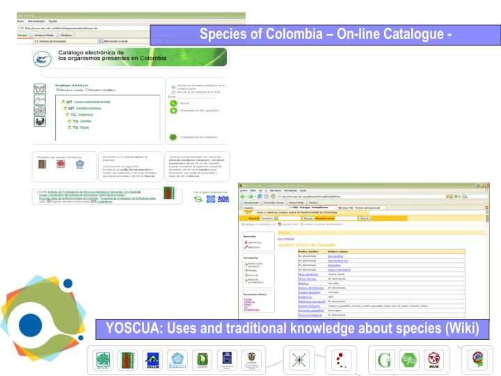 Species of Colombia – On-line Catalogue -