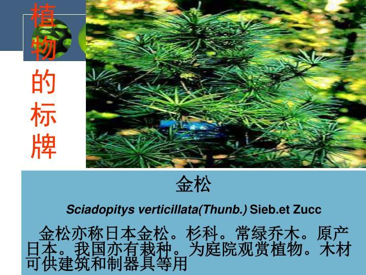 植物的标牌
