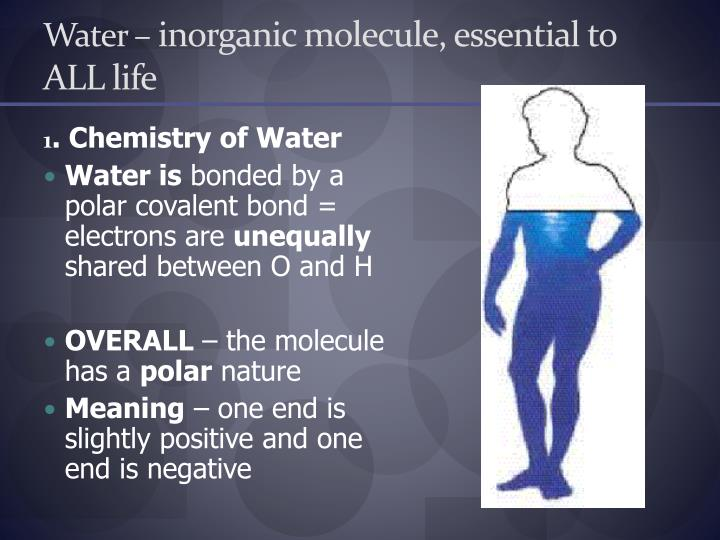 Water inorganic molecule essential to all life