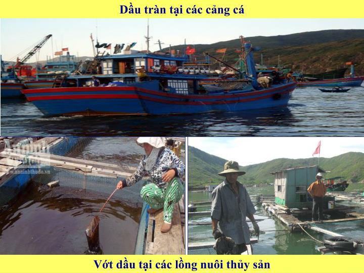 Dầu tràn tại các cảng cá