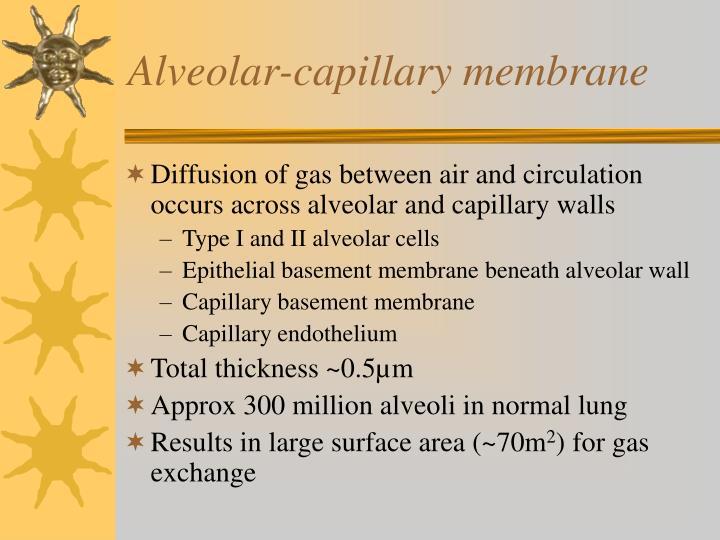 Alveolar-capillary membrane