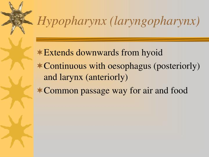 Hypopharynx (laryngopharynx)