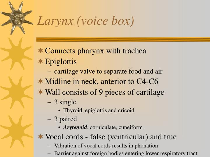 Larynx (voice box)