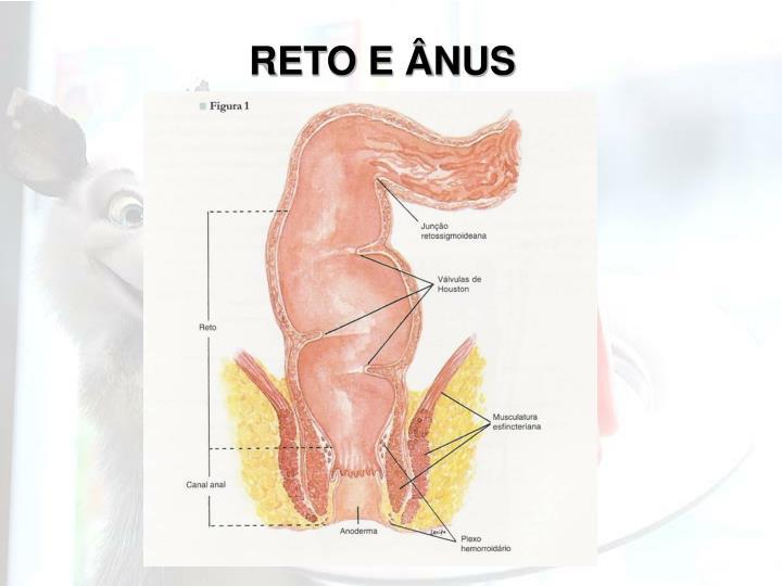 RETO E ÂNUS
