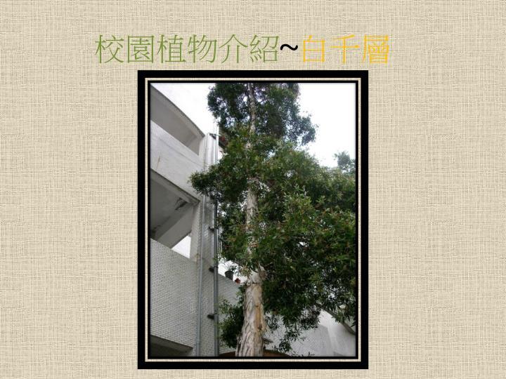 校園植物介紹