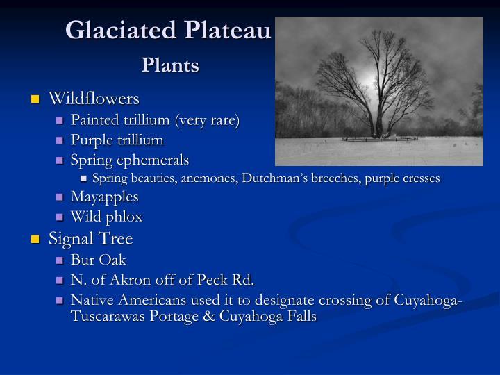 Glaciated Plateau