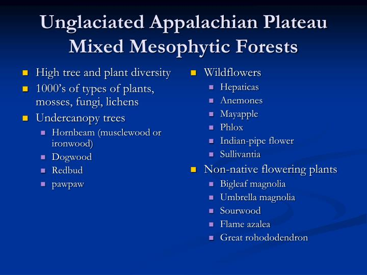 High tree and plant diversity